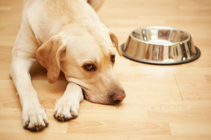 Can Dogs Get Depressed?